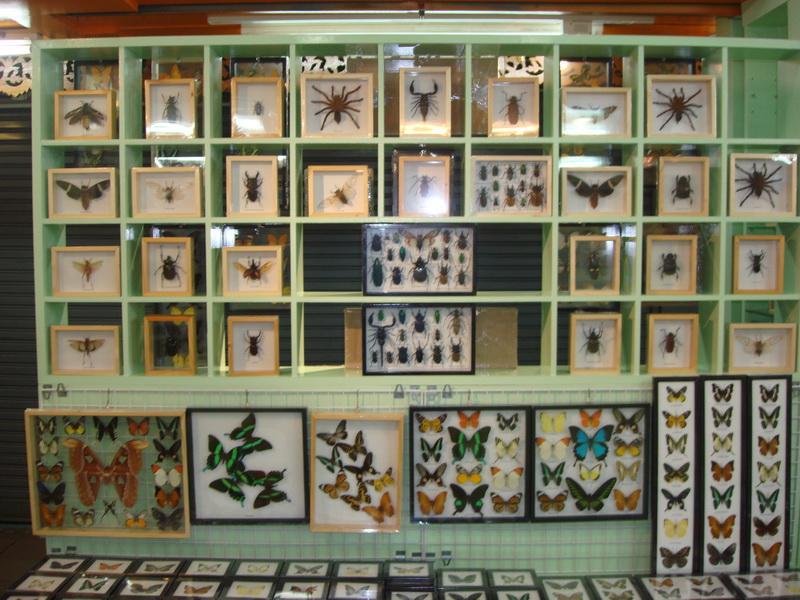 бабочки, жуки, пауки в рамках оптом